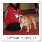 Luvipride in Expo_11