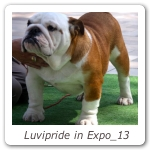 Luvipride in Expo_13