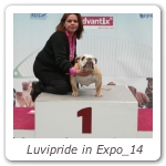 Luvipride in Expo_14