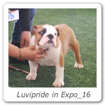 Luvipride in Expo_16
